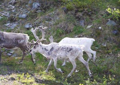 skandinavien2008_83_20080805_1567196024