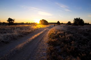 Luneburg Heath in the winter at sunrise