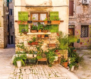 Flowers In Front Of Old Building-Rovinj, Croatia